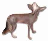 photo of a Chinese Crested Dog
