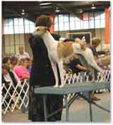 photo of a dog show