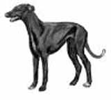picture of a greyhound compliments from demented pixie graphics