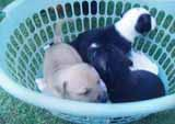 A photo of puppies in a basket