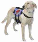 photo of a search and rescue dog